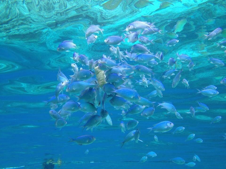 オランゴ島、セブ島の観光ダイビング